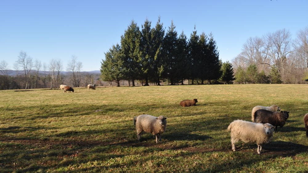 Sheep farm and pasture.