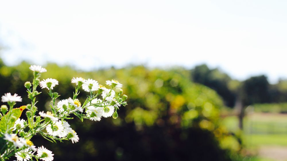 Seasonal flowers provide a simple elegance.