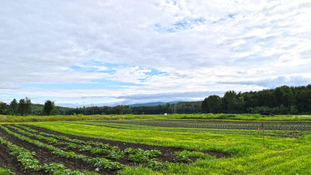 Farm's fields and produce