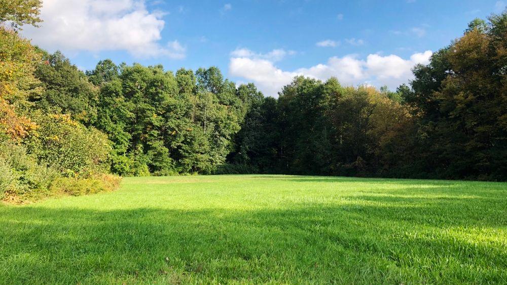 Spring/Summer Landscape!