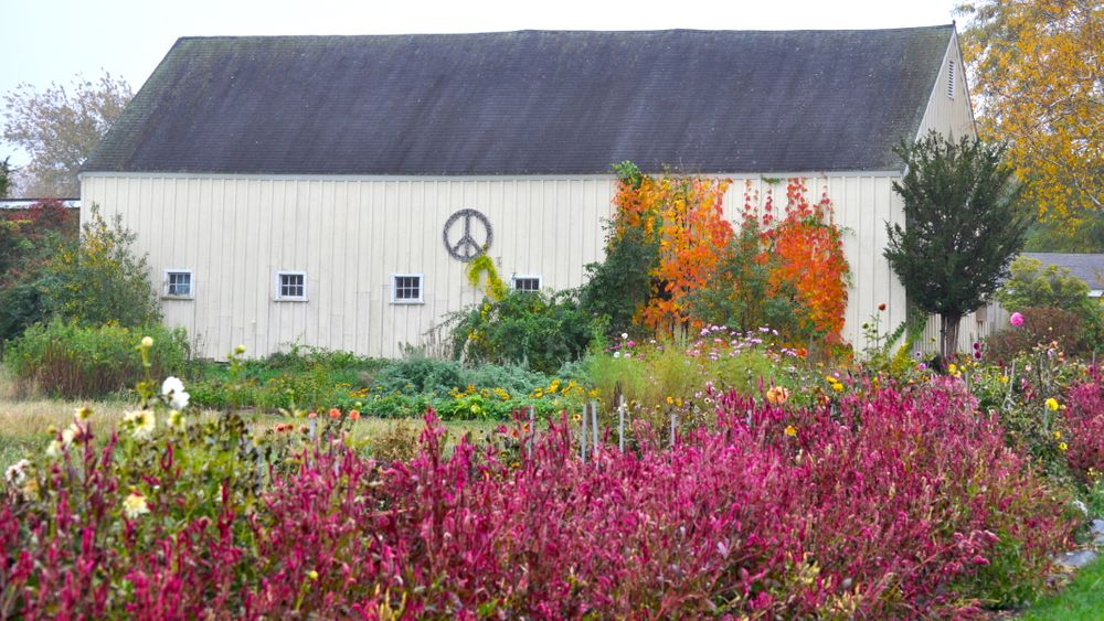 Antique yellow barn adorned with peace sign