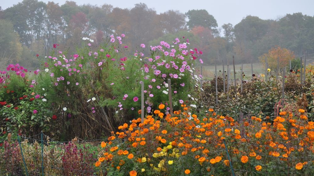 Farm's flowers on a dewy summer day