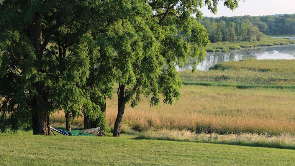 Pond view.