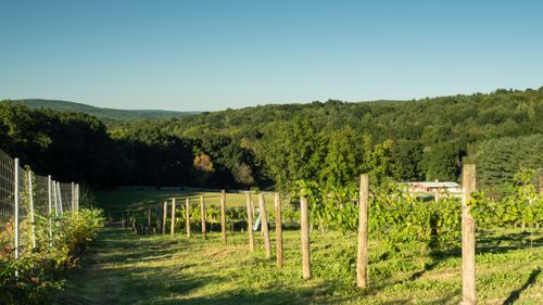Upper Valley Vineyard