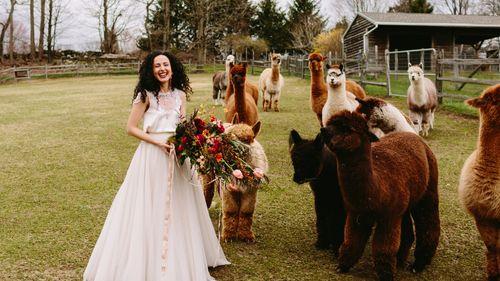 Hemlock Alpaca Farmstead