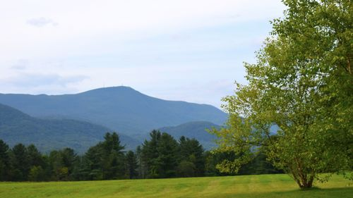 The Meadow at Mount Greylock