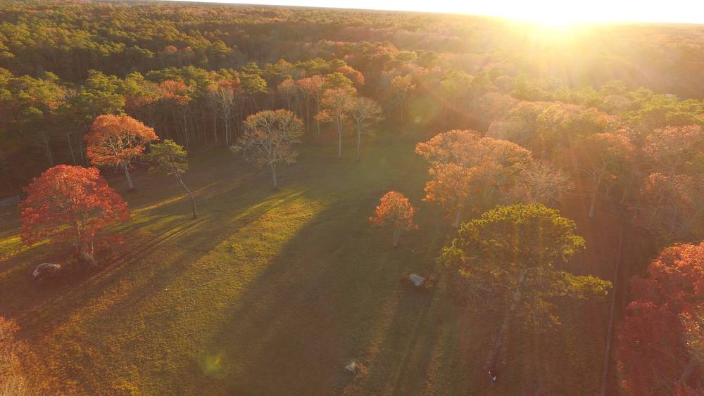 Cape Cod Hilltop Forest