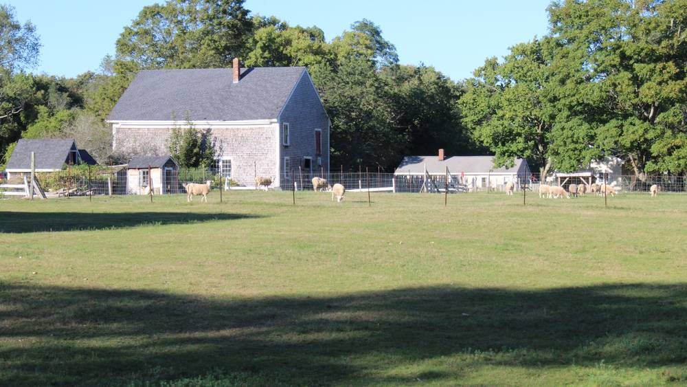 Private Pastures and Wool Weaving Studio